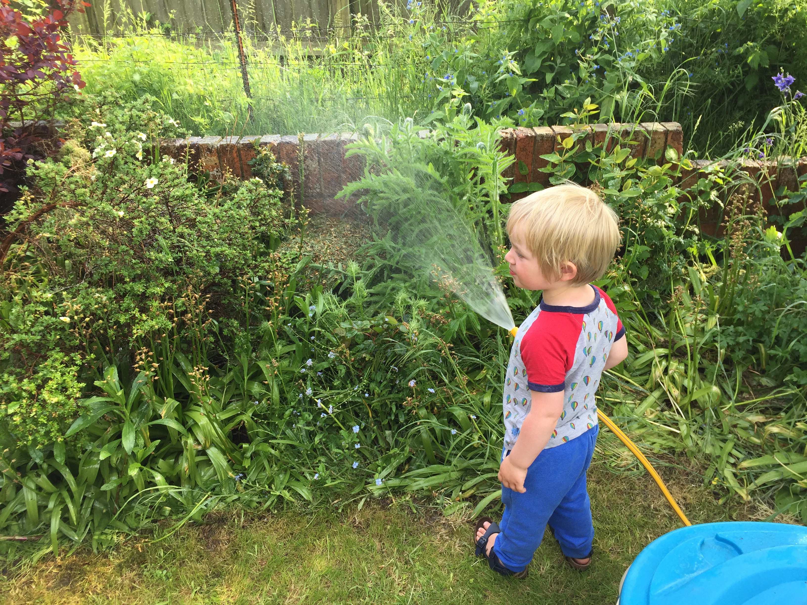 Noah doing his bit to keep the garden green.